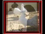 Barış Manço - Alla Beni Pulla Beni