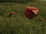 [o Zamanlar] Seals & Crofts - Wind Flowers