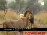 aslanlarla kucaklaşan adam