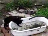 kedi balık avlamaya çalışıyor!!