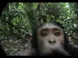 işte gerçek medya maymunu :))