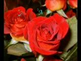 Gözbebeğim Sevigilier Günümüz Kutlu Olsun:):)