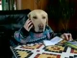 köpek cep telefonla konuşuyor
