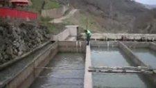 arslan canlı alabalık tesisleri www.oguzlular.com