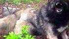 karadeniz dağ köpeği dağ komandoları