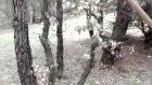 ağaç bakımı
