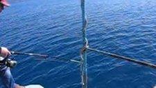 Mercan Mercan