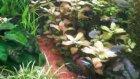 330 lt bitkili akvaryum fotosentez