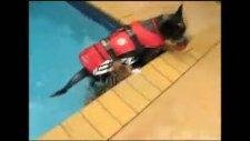 yüzen iran kedisi prinny!