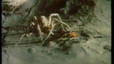 yaratılış gerçeği-1 bombardıman böceği