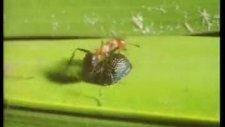 yaratılış gerçeği-2 badi böceği