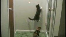 kedileri deli eden lazer ışığı!