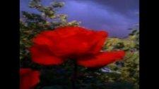 Ankaralı Namık Sevgiler Çiçek Gibi