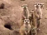 konuşan hayvanlar çok komik =)