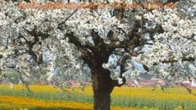 Bahar - Candan Erçetin