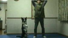 köpek ve egzersiz