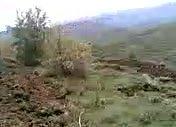Kutluca Köyü Arazisi Çam Dikim Çalışmaları 2