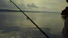 Balık Bahane