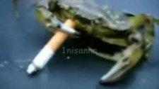 yengeç sigara içer mi?