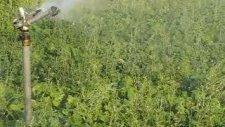 280 pc sprink uygulaması Yenikuyu köyü Karahallı
