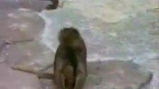 maymun aynaya bakrsa