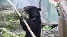 işte karşınızda kung-fu'cu ayı