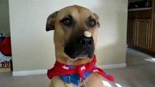 sahibinin sözünden çıkmayan akıllı köpek