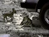 kedi köpek anlaşmazlığı