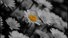 Bolahenk - Bir Canım Var Al Senin Olsun