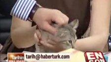 pelin batu canlı yayında kedi kovaladı