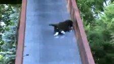 sevimli kedi yavruları kaydıraktan kayarken