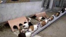 hamsterlar zil çalınca yuvalarına giriyor!