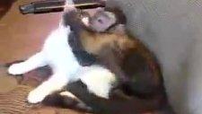 yasak ilişki -  aşkı memmu kedi ile maymun