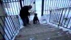 iki ayakla merdıven cıkan köpek
