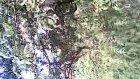 Ciftepir