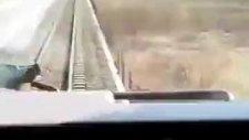 öküzün trene son bakışı