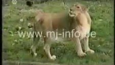 hayvanlar aleminden komik görüntüler