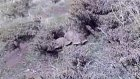 Kaplumbağaların Cinsel Hayatı