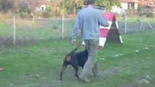 candostumuz köpek eğitim üretim çiftliği muğla