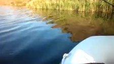 Turna Balığı Avı79 Kaçış