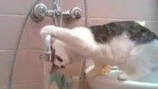 sıcak kedileri bile vurmuş işte sonuç xd