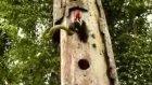 inatçı ağaç kakan yılana kafa tutuyor..!!