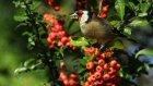 doğa kuşları