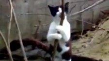 yetenekli kedi