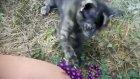 çapkın minik kedi iş başında
