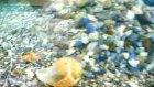 japon balıklar