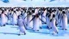 hiphopçı penguenler