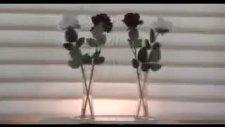 Apologize-Taylor Lautner