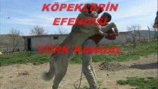 Türk Kangal; Sivas Kangalı belgeseli