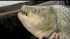 bu balık oltaya geldi :)